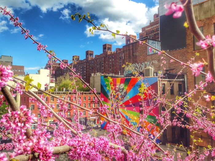 Cherry blossoms and street art at the Highline